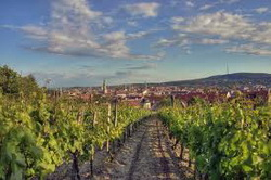 vinska kultura u austriji